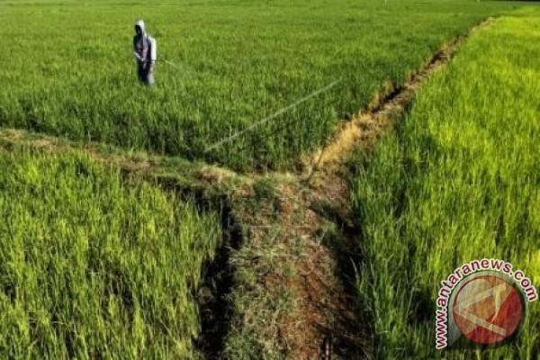 Bupati: 62 Persen Masyarakat Mamuju Pekerja Pertanian