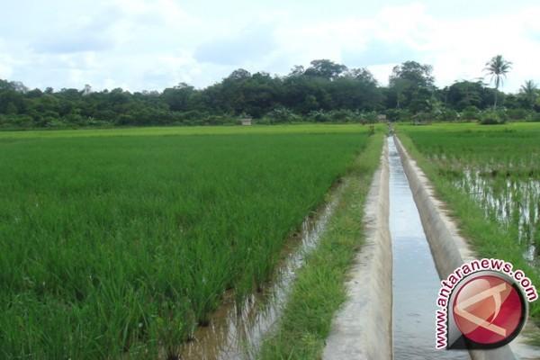Proyek Irigasi Nasional Di Mamuju Menguntungkan Petani
