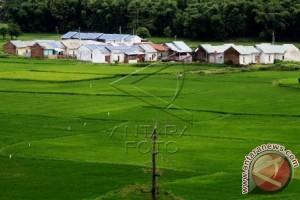 Pemprov Sulbar akan cetak sawah 10.000 hektare