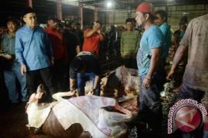 Wali Kota jamin stok daging Makassar aman