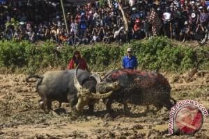 Dispar Dorong Toraja Jadi Destinasi Wisata Halal