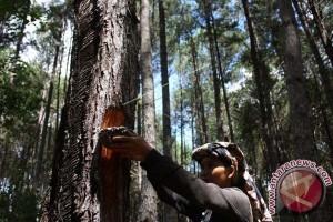 Wisata hutan alam Mamuju potensial dikembangkan