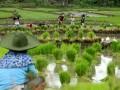 Petani menanam padi di persawahan Desa Bonto Lohe, Kabupaten Bulukumba, Sulawesi Selatan, Sabtu (7/1). Kementerian Pertanian Republik Indonesia menargetkan produksi padi pada tahun 2017 meningkat 3,9 persen atau mencapai 77 juta ton dibandingkan pada tahun 2016 hanya mencapai 72 juta ton dengan menitikberatkan pada peningkatan pencetakan sawah dan perluasan areal persawahan. ANTARA FOTO/Abriawan Abhe/pd/17