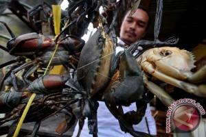 BKIPM lepasliarkan 2.622 kepiting bakau