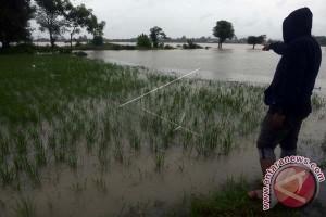 Banjir Terjaring Dua Hektare Lahan Pertanian Manokwari