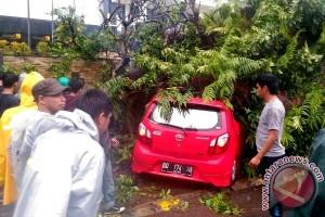 Cuaca Buruk Tumbangkan Puluhan Pohon Di Makassar