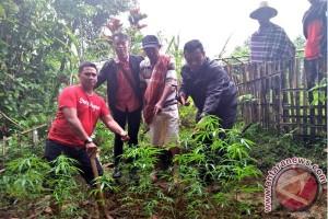 Polres Toraja Amankan Pengisap Ganja Tanaman Sendiri