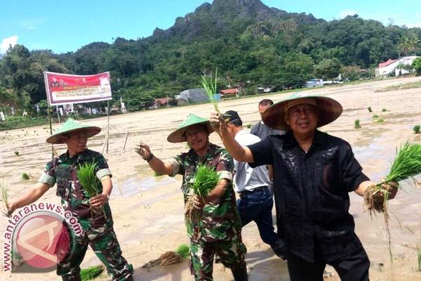 Pemkab Toraja Utara Gelar Percepatan Penanaman Padi