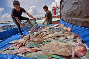 Produksi Ikan Di Mamuju 11 Ribu Ton Setahun