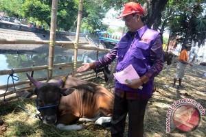 Hewan Kurban Masuk Makassar Diprediksi 7.000 Ekor