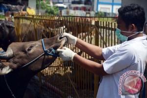 Pemkot Makassar Periksa Kesehatan Hewan Kurban