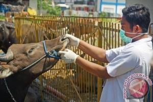 DP2 Makassar kerahkan dokter pantau hewan kurban