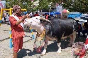 """Karnaval Tedong"" Warnai Peringatan HUT Toraja Utara"