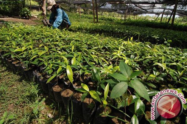 Dinas Perkebunan Sulsel Bagikan Ratusan Ribu Bibit