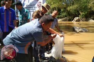Pemkab Toraja Utara Tebar Bibit Ikan Nila