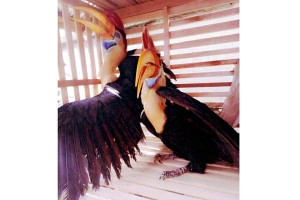 BPPH Sulawesi Gagalkan Pengiriman Burung Satwa Dilindungi