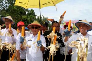 Sulbar Bantu Bibit Ke Petani Polewali Mandar