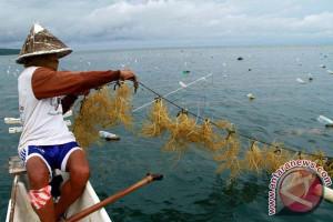 ALRI hopes to increase exports of seaweed to China