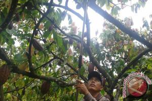 Petani Mancanegara Belajar Kakao Di Mars Indonesia