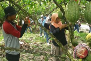 Mengintip Aktivitas Para Penghulu Kakao PT Mars