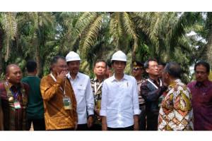 GAPKI : Peningkatan Produktivitas Kelapa Sawit Program Mendesak