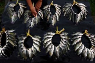 Produksi ikan tawar Sulsel capai 18.976 ton