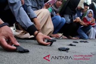 Anggota Polres Majene lepaskan ratusan tukik