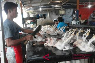 Harga daging ayam di Makassar naik
