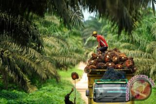 Perusahaan Korea bakal masuk ke industri biodiesel Indonesia