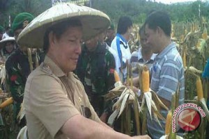 Pemkot Manado dan Korem Panen Jagung