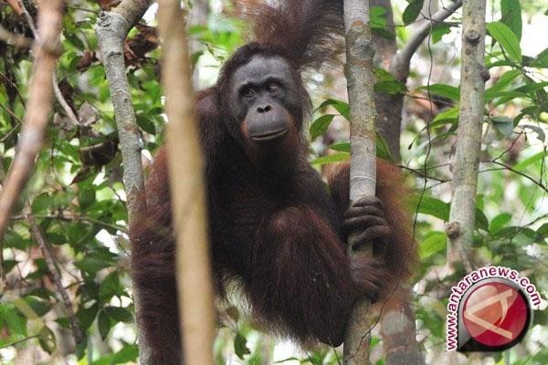 Indonesia Timur pusat keanekaragaman hayati