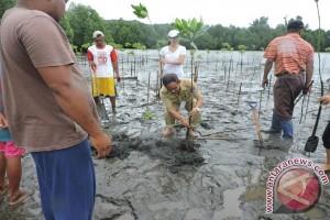 DKP Minahasa Tenggara Tanam 3.500 Bibit Mangrove