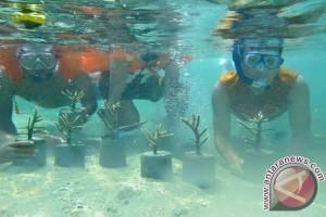 Pegiat lingkungan mulai lakukan transplantasi karang