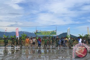 Kodim Bolmong  tanam padi  serentak  di Sangtombolang