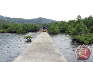 Mangrove Jadikan Tongkaina Tangguh Bencana