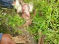 Penemuan bayi perempuan di Kelurahan Tataaran Patar Kecamatan Tondano Selatan, tepatnya di seputaran Universitas Negeri Manado. Kondisi bayi masih hidup dan sudah ditangani Dinas Pemberdayaan Perempuan dan Perlindungan Anak bersama penyidik Polres Minahasa.