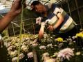 Petani memanen bunga Krisan di perkebunan bunga di Tomohon, Sulawesi Utara, Minggu (6/8). Beragam warna bunga Krisan (Chrysanthymum morifolium) tersebut dijual seharga Rp 2.500 hingga Rp 3.500 per tangkai, dan telah dipasarkan ke sejumlah daerah seperti Maluku, Papua dan Batam. ANTARA FOTO/Adwit B Pramono/17.