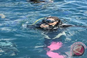 Wujudkan Kepedulian Lingkungan Pertamina Dukung Transplantasi di Pulau Lembe