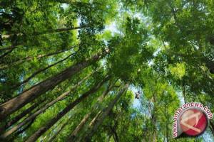 Pemprov Sulut: Pelestarian Hutan Diganggu Pembalakan Liar