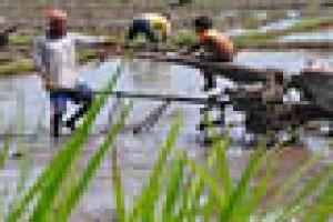 Mataram dapat anggaran perbaikan irigasi Rp5 miliar