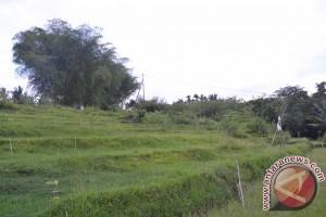 Silang Sengketa Tanah Pemakaman Bunut Baok