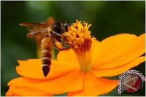 Renjana Belantara Batulanteh jadi Kampung Halaman Lebah
