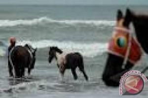 Derap Kaki Kuda di Pesisir Samawa