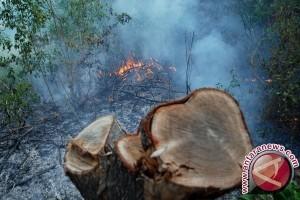 Gubernur NTB Pantau Lapangan Terkait Perambahan Hutan