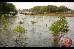 Kementerian LHK Targetkan Peta Mangrove Selesai 2019