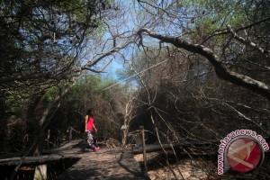Ekosistem Mangrove Alami Tekanan Kuat