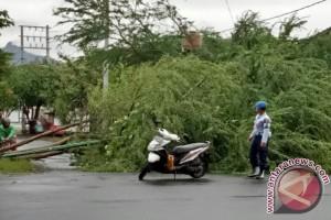 Belasan Pohon Tumbang Akibat Cuaca Ekstrem