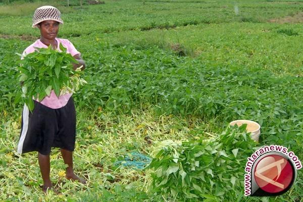 Nilai Tukar Petani NTB Meningkat 0,17 Persen
