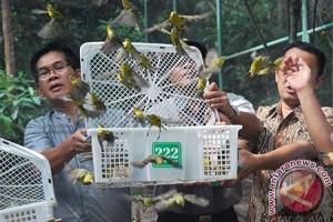 Bksda NTB Amankan 2.491 Ekor Burung