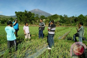 BI NTB Libatkan Pakar Pertanian Kembangkan Bawang Putih